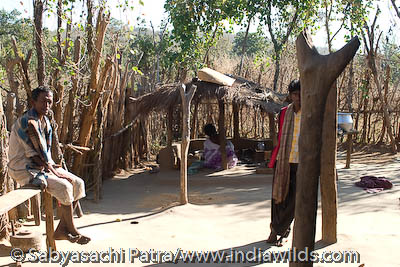 Paharia tribe in Sunabeda Sanctuary, Orissa