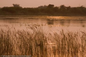 Will this be the sunset on the beautiful wetlands