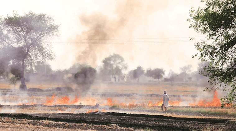 Paddy Stalk burning in Punjab Image Courtesy - Online Media