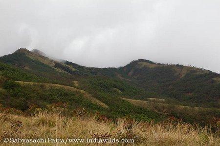 Eucalyptus plantations near shola forests. Eucalyptus plantations deplete ground water where as shola forests absorb water and stop water runoff and soil erosion