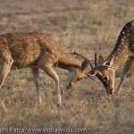 www.indiawilds.comdiarysabyasachi_20060505_2639.jpg