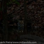 www.indiawilds.comdiarysabyasachi_20060505_3060.jpg