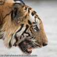 Bandhavgarh Diary 2009 28th March The alarm in my mobile started ringing and I knew it was time to wake up. I had boarded the Utkal Express the previous day from Delhi and it was...