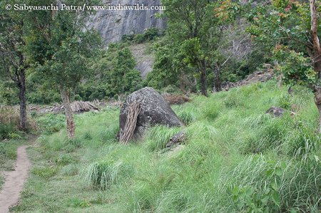 www.indiawilds.comdiarysabyasachi_20090625_0057.jpg