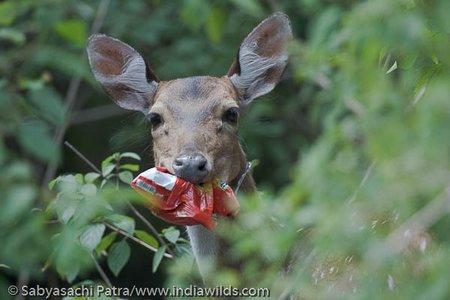 www.indiawilds.comdiarysabyasachi_20090830_1153.jpg