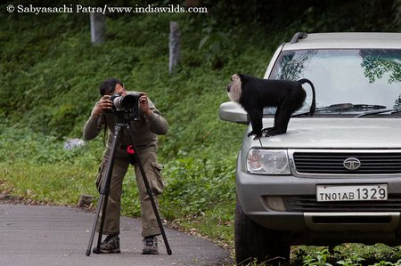 Sabyasachi photographing a lion tailed Macaque on his Safari
