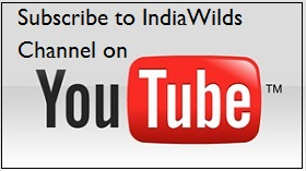 Subscribe to You Tube