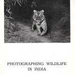 Photographing Wildlife in India by TNA Perumal
