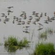 Migratory Birds Add colour to Vizag By Mrs Shakti Bishnoi & Mr A S Bishnoi The nip in the air signalled the onset of winter in the city and the season along with its chills, […]