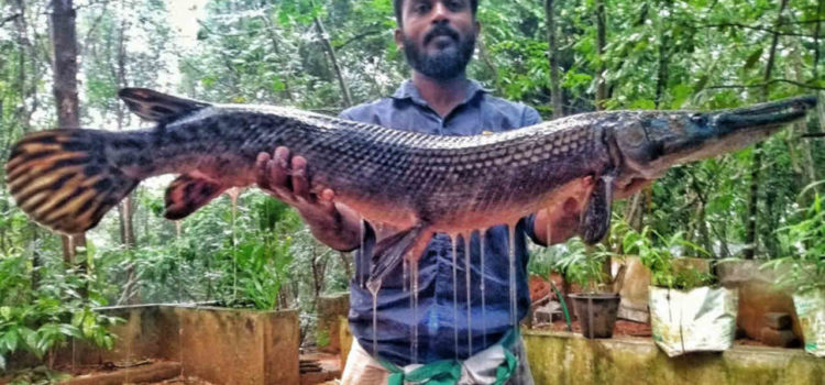 IndiaWilds Newsletter Vol. 11 Issue VIII ISSN 2394 – 6946 Download the full Newsletter PDF by clicking the below button – Exotic Fish Challenge to India's Biodiversity: In this era of Climate Crisis, where extreme […]