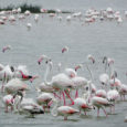 Point Calimere: Journey to a Bird Paradise Since the day I first saw a migratory bird near Vishakhapatnam airport, my interests in watching migratory birds have increased manifold. When the busy, rusty and boredom inducing […]