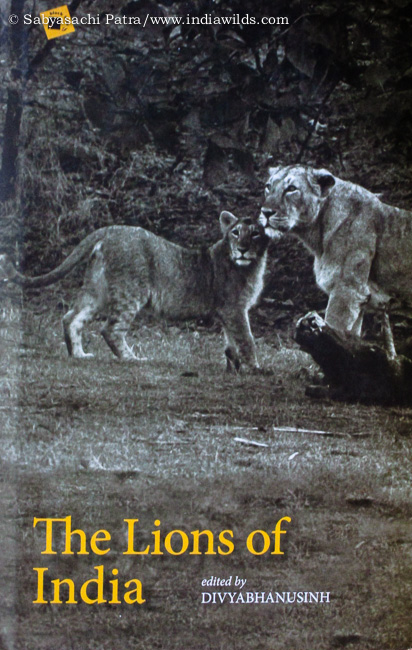 The book 'The Lions of India' by Divyabhanusinh is a thoughtful compilation of twenty-two articles from the late 1800s till 2008 by many authors. This book was published in 2008 and is of topical interest in view of the recent controversy about the origin of Indian lions, as well as the need to create a second home for them. From thoughts of British Army Officers who had mostly got information about the lions while trying to hunt them to the point of view of researchers, photographers, conservationists, this book has it all.
