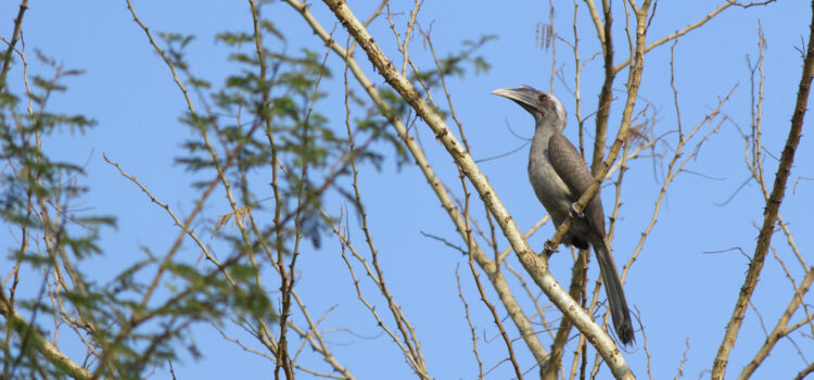The Other Side of Zoo Story: Birds from my Window during Lockdown By Mrs. Shakti Bishnoi Humans everywhere were forced to self-isolate due to the coronavirus pandemic. The coronavirus pandemic has heralded us into a […]