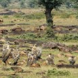 Panna Drowning: Fears of a Volunteer By Durga Prasad Srivastava The first thing that comes to my mind when I think of Panna is the soaring vultures. Panna is one of the best places to […]