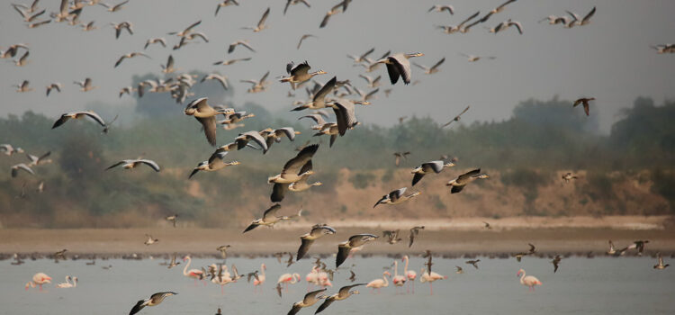 NALSAROVAR: LOSING ITS GLORY The Nalsarovar Lake, spread over 120.82-sq-km, is in a low-lying area between Central Gujarat and East Saurashtra. It is a serene marshland, with shallow waters of 4 to 5 feet, containing […]
