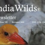 IndiaWilds Newsletter-Dec 2020