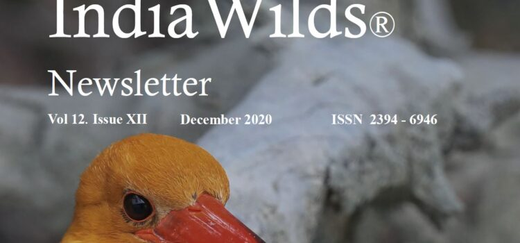 IndiaWilds Newsletter Vol. 12 Issue XII ISSN 2394 – 6946 Download the full Newsletter PDF by clicking the below button – Safety of Humanity Lies in Saving Forests As 2020 comes to a close, people […]