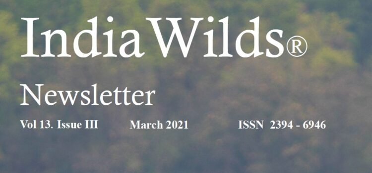 IndiaWilds Newsletter Vol. 13 Issue III ISSN 2394 – 6946 Download the full Newsletter PDF by clicking the below button – Give Chance to Nature to Recolonise  Human population has grown from 1.6 billion in […]
