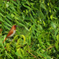 MUNIA STORY By Miss Kanan Bishnoi (Class 2nd)   When I wake up in the morning, Many birds are calling, Munia is picking up the grass, For her babies she forecasts, All the grass she […]