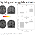 City Living and Amygdala activities
