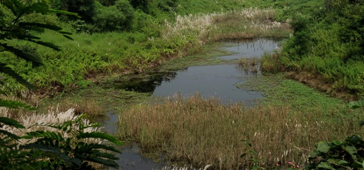 Industrial hub or Biodiversity trove? – What is your choice! Asansol – Durgapur industrial region is popular for its contribution to the Indian economy through its coal and industrial production. But apart from this economical […]