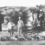Tiger Hunt in British era