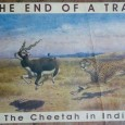 The End of A Trail: The Cheetah in India By Divyabhanusinh As the title of the book The End of A Trail: The Cheetah in India suggests, one gets to know the complete history of […]