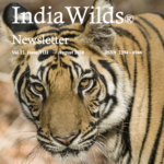 Tiger Indiawilds newsletter Aug 2020