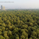 Mangroves in Mumbai