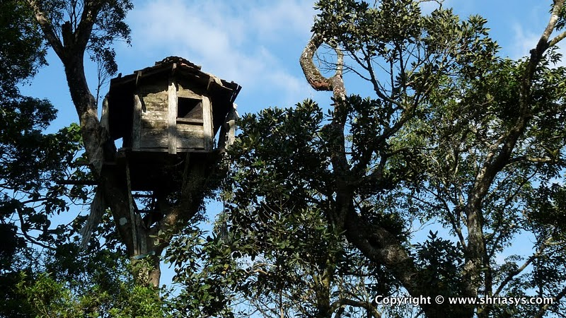 Tree Top House At Vellimalai